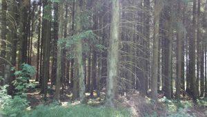 der nahe gelegene Wald lädt zu Geländespielen ein